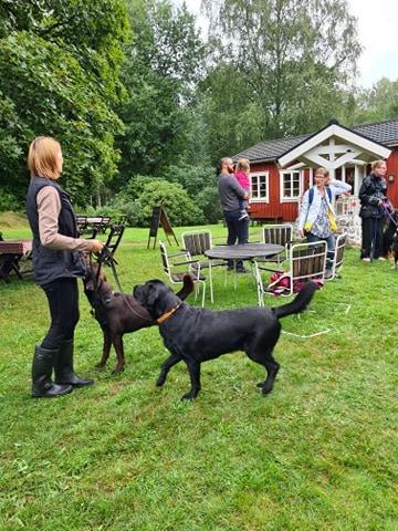 Våffelfika/Hundaktivitet 200823