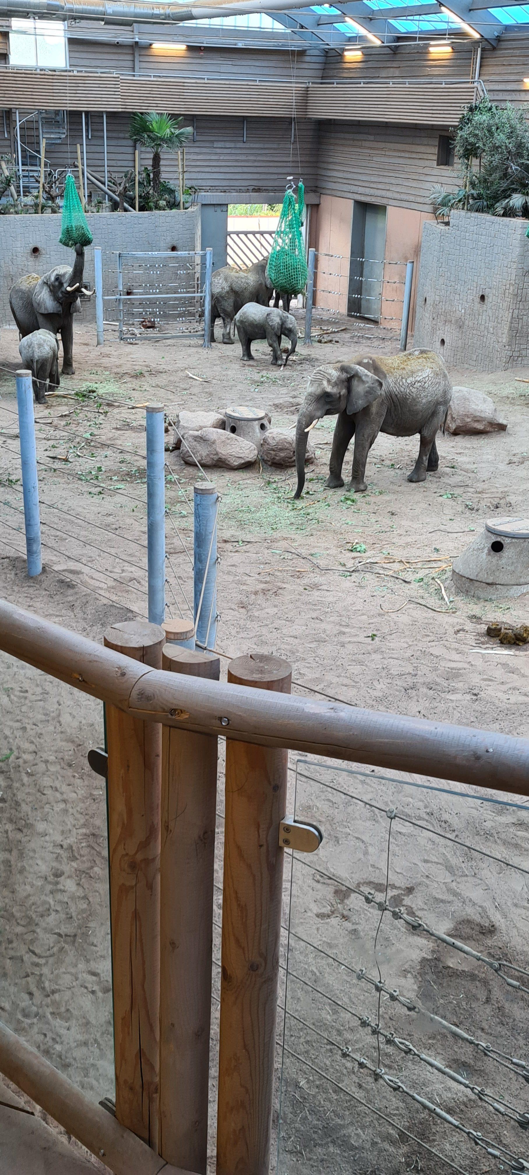 Borås djurpark_20200905 (3)