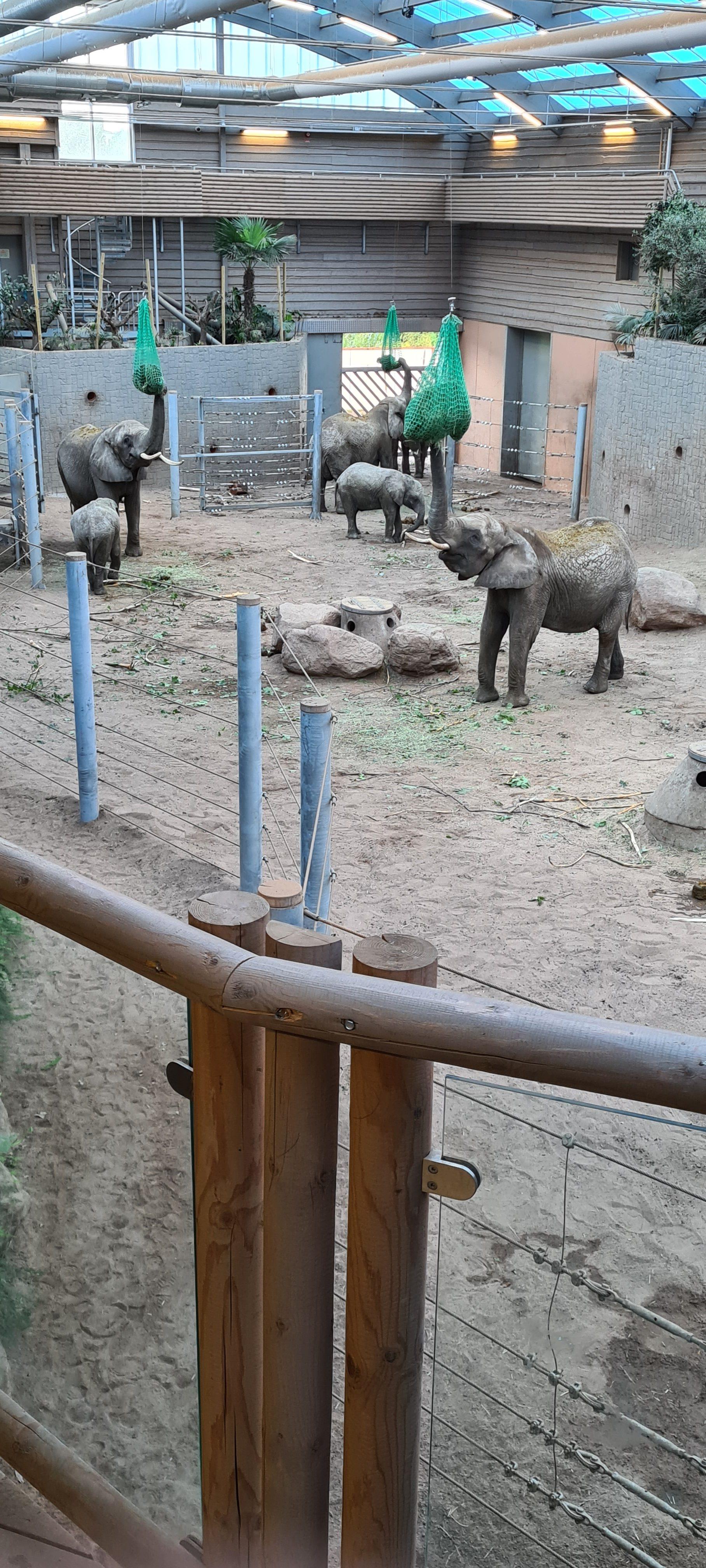Borås djurpark_20200905